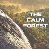 The Calm Forest by Deep Sleep Relaxation