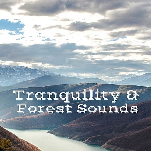 Tranquility & Forest Sounds by Yoga Music