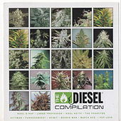 Diesel Compilation: Sickbay Records by Various Artists
