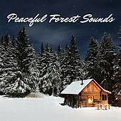 Peaceful Forest Sounds by Deep Sleep Relaxation