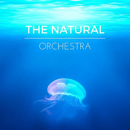 The Natural Orchestra by Yoga Tribe