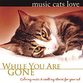 Music Cats Love: While You Are Gone by Bradley Joseph