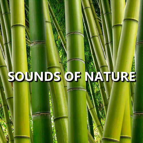 Sounds of Nature by Sounds Of Nature