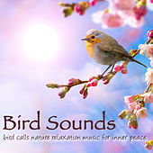 Bird Sounds - Bird Calls Nature Relaxation Music for Inner Peace by Bird Songs Nature Music Specialists