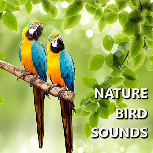 Nature Bird Sounds by Bird Sounds