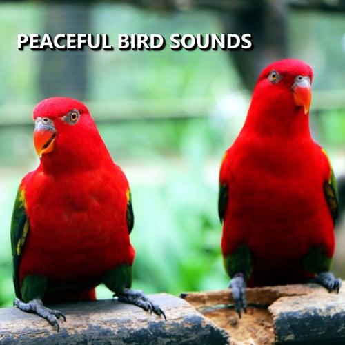 Peaceful Bird Sounds by Bird Sounds