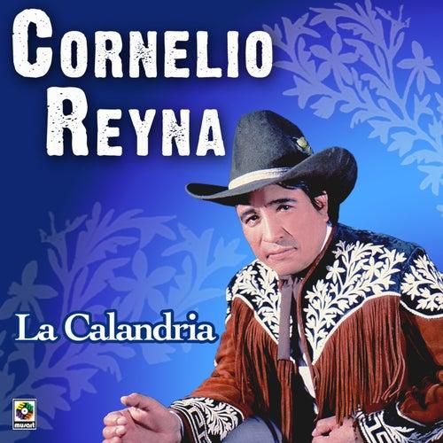La Calandria by Cornelio Reyna