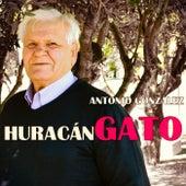 Huracán Gato Remasterizado by Antonio González