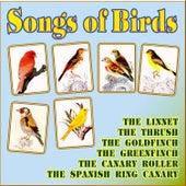 Songs of Birds by Songs of Birds