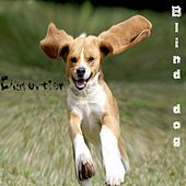 Distortion by Blind Dog