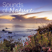 Sounds of Nature – Ambient Nature Sounds for Relax, Meditation, Sleep by Sounds of Nature Relaxation