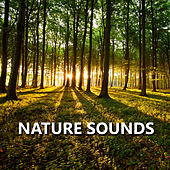 Nature Sounds by Sounds Of Nature