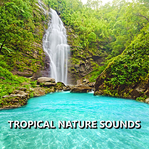 Tropical Nature Sounds by Sounds Of Nature