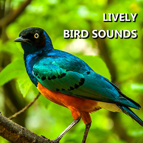 Lively Bird Sounds by Bird Sounds