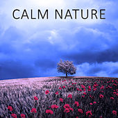 Calm Nature – Ocean, Sounds of Nature, Relaxation, Birds, Calm Music, Soft Nature by Sounds of Nature Relaxation