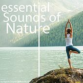 Essential Sounds of Nature by Various Artists