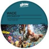 Specimen by Wade