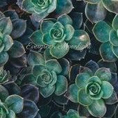 Evergreen Moonlight by Yoga Music