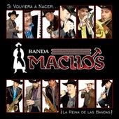 Si Volviera A Nacer by Banda Machos