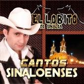 Cantos Sinaloenses by El Lobito De Sinaloa