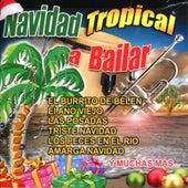 Navidad Tropical a Bailar by Various Artists