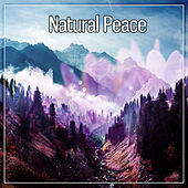 Natural Peace – Slow Waves, Natural Immersion, Sleepy Sounds, Peaceful Music by Organic Sound