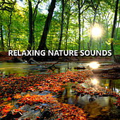 Relaxing Nature Sounds by Nature Sounds Nature Music