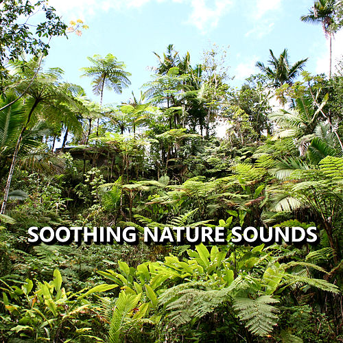 Soothing Nature Sounds by Nature Sounds Nature Music