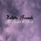Nature Sounds: The Sound Of Sleep by Various Artists