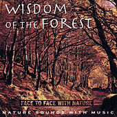 Wisdom of the Forest by Medwyn Goodall