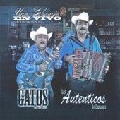 Una Bohemia en Vivo Con Tuba y Acordeon by Los Gatos De Sinaloa