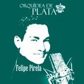 Orquídea de Plata by Felipe Pirela