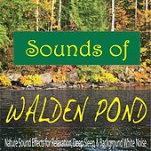 Sounds of Walden Pond: Nature Sound Effects for Relaxation, Deep Sleep, & Background White Noise by Steven Current
