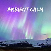 Ambient Calm by Meditation Music Zone