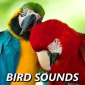 Bird Sounds by Bird Sounds