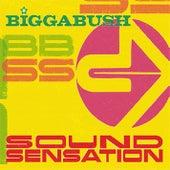 Bigga Bush Sound Sensation by Various Artists