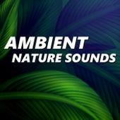 Ambient Nature Sounds by Ambient Nature Sounds