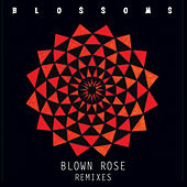 Blown Rose by Blossoms