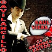 24 Grandes Exitos by Saul Viera el Gavilancillo