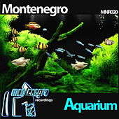 Aquarium by Monte Negro