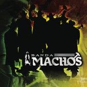 El Ruidito by Banda Machos