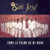 Como La Palma De Mi Mano by Banda San Jose De Mesillas