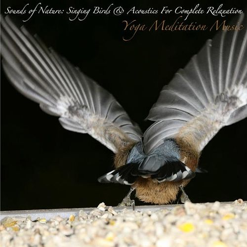 Sounds of Nature: Singing Birds & Acoustics for Complete Relaxation by Yoga Meditation Music
