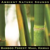 Bamboo Forest: Maui, Hawaii by Ambient Nature Sounds