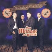 Entre Alacranes Y Gallos by Los Morros Del Norte