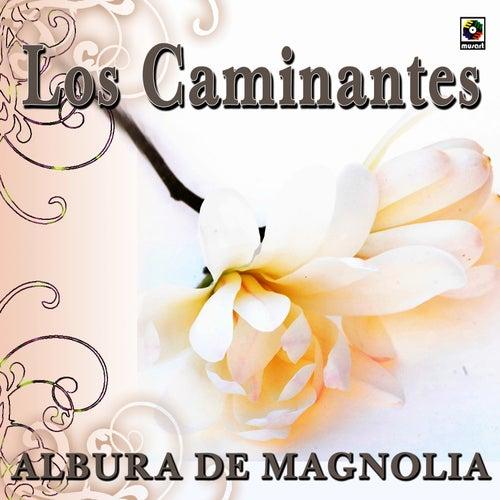 Albur De Magnolia by Los Caminantes