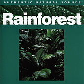 Rainforest by Sounds Of Nature