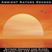 Nature Sounds for Sleep, Relaxation and Meditation by Ambient Nature Sounds