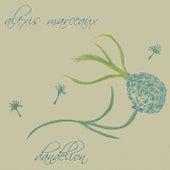 Dandelion by Alexis Marceaux