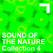 Sound Of The Nature – Collection 4 by Various Artists